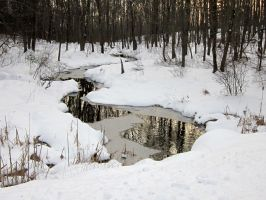 January 2013 Outdoors - Brook by Colornote
