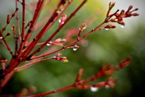 red branches and drops by emregurten