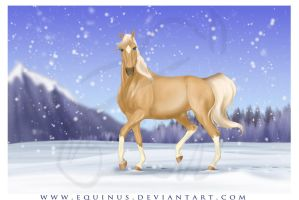 Winter Dance by Equinus