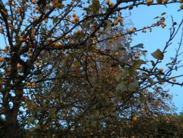 Confused Crab Apple by LadyAcceber