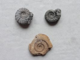 Fossil Stock 19 by Ox3ArtStock