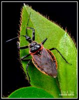 Black and Red Bug by Eccoton