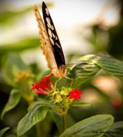 Chasing Butterflies III by MyLifeThroughTheLens