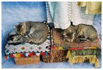 Sleeping Cats by DanielGnomes