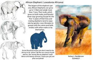 African Elephant by kelseyleah