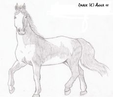 Horse by Anna-XIII