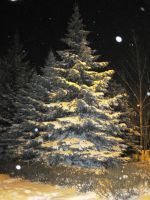 Snow fir tree forest night winter 3 by Redilion