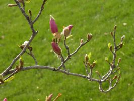 row of buds by Richardbargowski