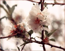 Spring's message by ShlomitMessica