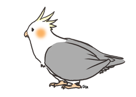 Cockatiel by BarryChoppa