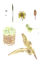 Watercolour selection by forget-the-sun