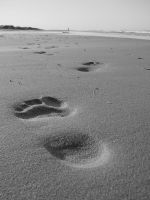 Footprints by Blue-to-the-Bone