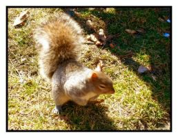 Squirrel by fightingtears