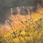 Autumn momments by Zelma1