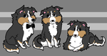 sheltie party by layt0n