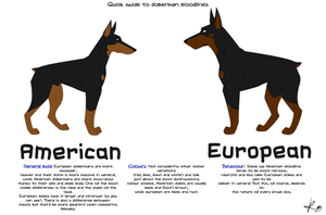 Doberman bloodlines guide by dmntninja