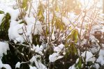 Photo: Snow and sunlight by Mariesen