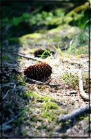 pinecone by elscotto