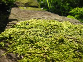 moss by dabeck