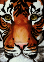 Tiger in Oil by Krissey