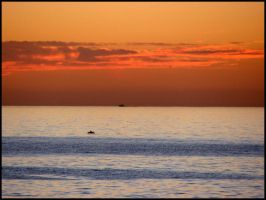 Sunset Dolphin by andromeda