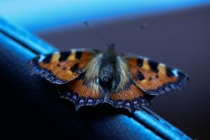 Butterfly by amyhooton