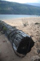 Chained Stump by Seath