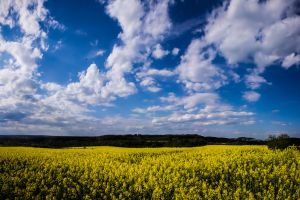 yellow and blue2 by DanielGliese