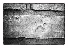 paw print by thelizardking25