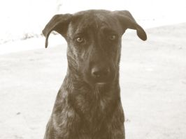 Dog by isatere
