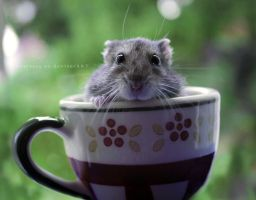Just a h a m s t e r in a teacup by GiuliaDepoliART