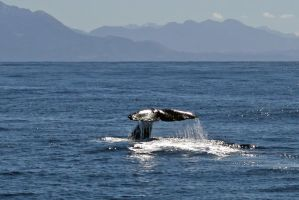 whale tale by MarcCopeland