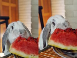 Eating watermelon! by Lactucaa