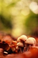 Autumn Family by FreyaPhotos