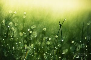 Morning Dew by Nitrok