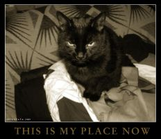 tHIS iS mY pLACE nOW by cataya