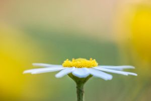 Sunny Side Up by OrihonPhotography