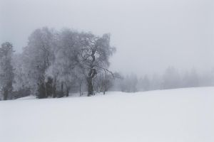 lonesome trees by schattenlosefotos
