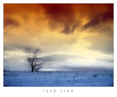 lone tree by disfractional