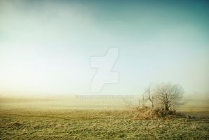 misty marshland by guality