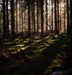 Fairyland I by UlfStubbe