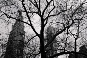 Bare Branches in the City by VeryBadGirl