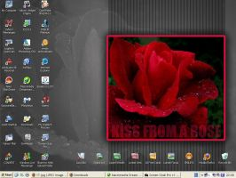 Wet red rose desktop by Loreleike
