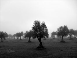 foggy morning by lady-mephista