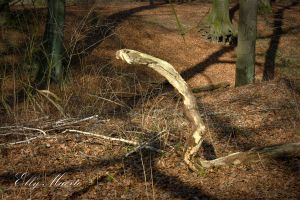 A Forest - Serpent XII by 666gothika666