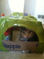 This cat now owns Snapple by MaliaMaria