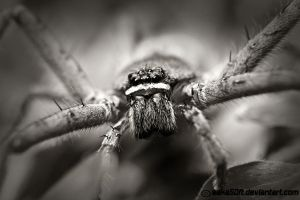 Old Spider by saka50ft