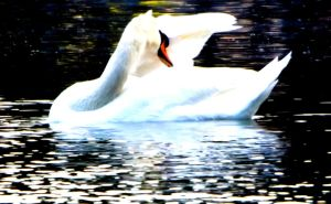 Cygne by sleepneverend