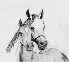 horses by dielectric-m