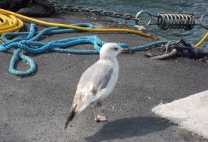 Seagull by alazada9855